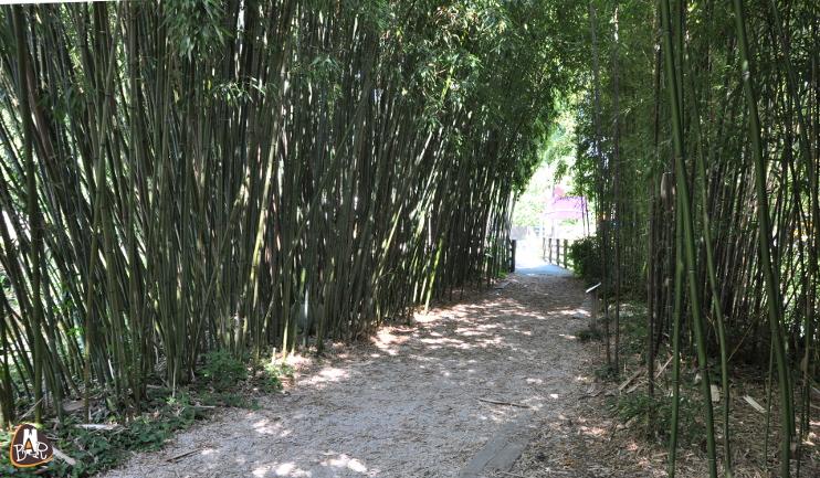 L'allée des bambous