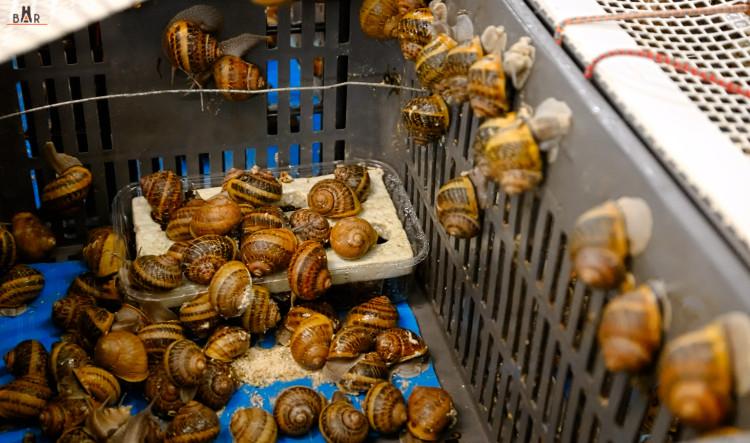 escargots-bouzy-3