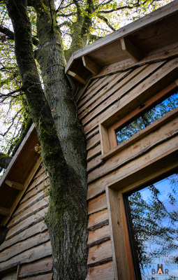la cabane est construite autour du tronc du chene