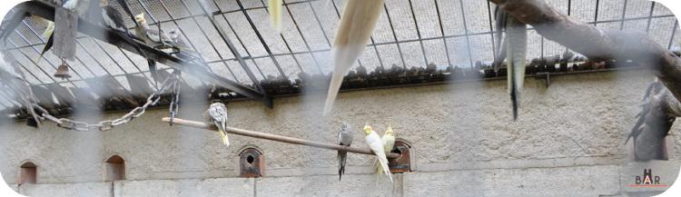 ferme-aux-oiseaux-11