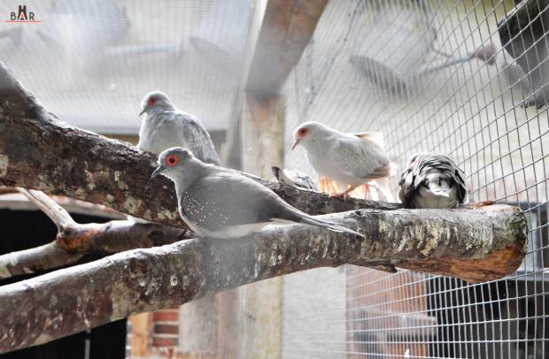 ferme-aux-oiseaux-15