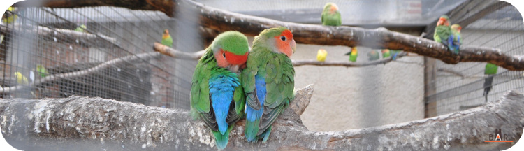 ferme-aux-oiseaux-8