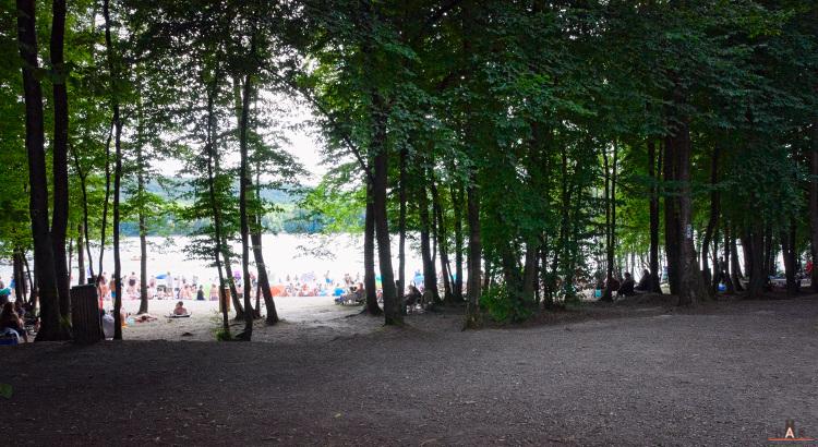 Près de la plage du lac des Vieilles Forges, la forêt