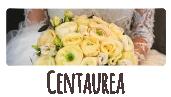 centaurea-vignette