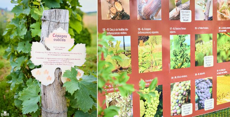 jardin-de-vignes-chouilly-5
