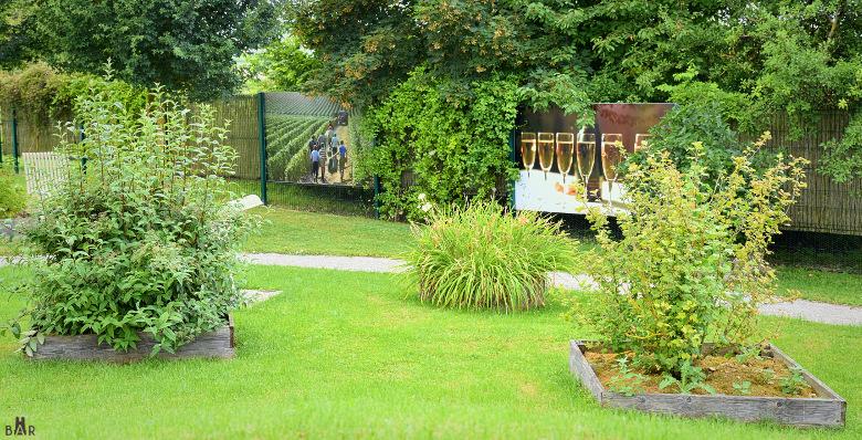 jardin-de-vignes-chouilly-6