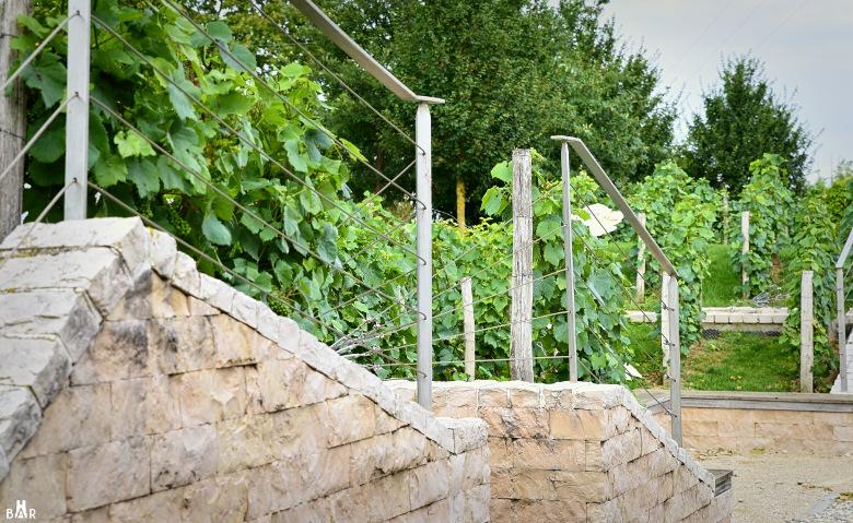 jardin-de-vignes-chouilly-7