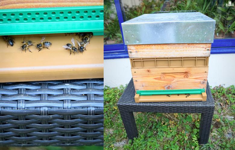 miel-des-sages-ruche-abeilles